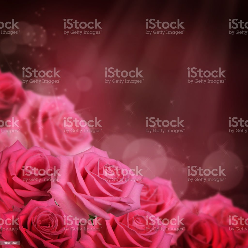 Pink rose  as a background royalty-free stock photo