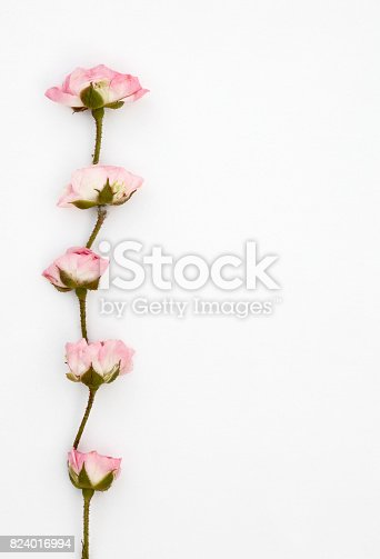 Pink rose border with copy space