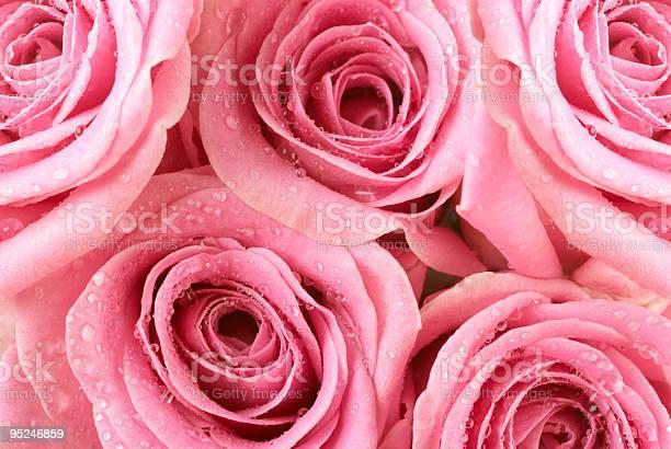 Pink rose dew drops picture id95246859?b=1&k=6&m=95246859&s=612x612&h=9dh16qqjx0i9dlsjkookkfeguhwo6fmbg44sk7igbvo=