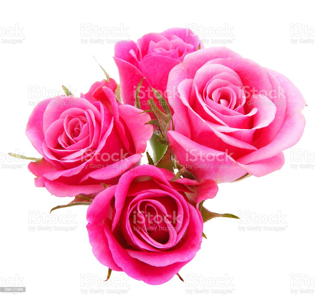 Pink Rose Flower Bouquet Isolated On White Background Cutout Stock