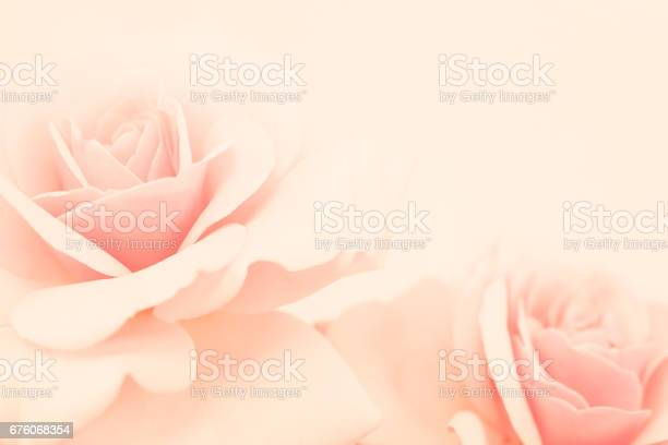 Pink rose flower in vintage color style for romantic background picture id676068354?b=1&k=6&m=676068354&s=612x612&h=hoppuxybx3x ysoh3ndrmqs i5ns3 ygtad5ukffauu=