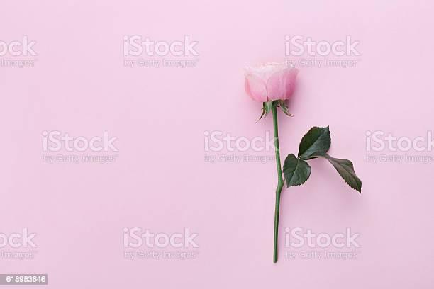 Pink rose flower on pastel background top view flat lay picture id618983646?b=1&k=6&m=618983646&s=612x612&h=vabxcaljdznn33jzrtupqcamyl5jsyzudkfnwmbqa w=