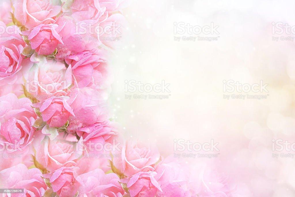 pink rose flower on soft bokeh vintage background for valentine – Foto