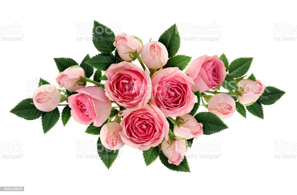 Pink rose flowers and buds arangement stock photo