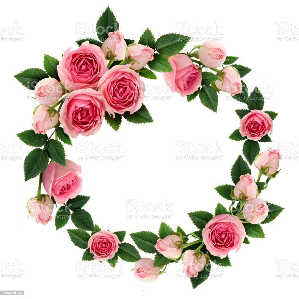 Pink Rose Flowers And Buds Circle Frame Stock Photo More Pictures