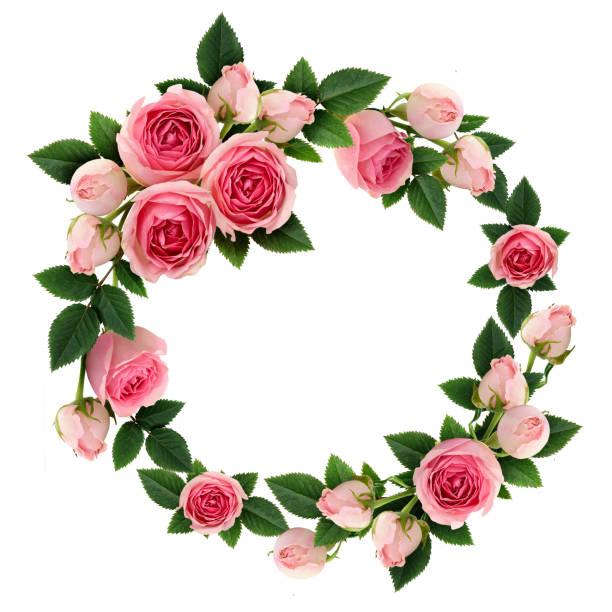rosa rose blüten und knospen kreis-frame - foto collage geschenk stock-fotos und bilder