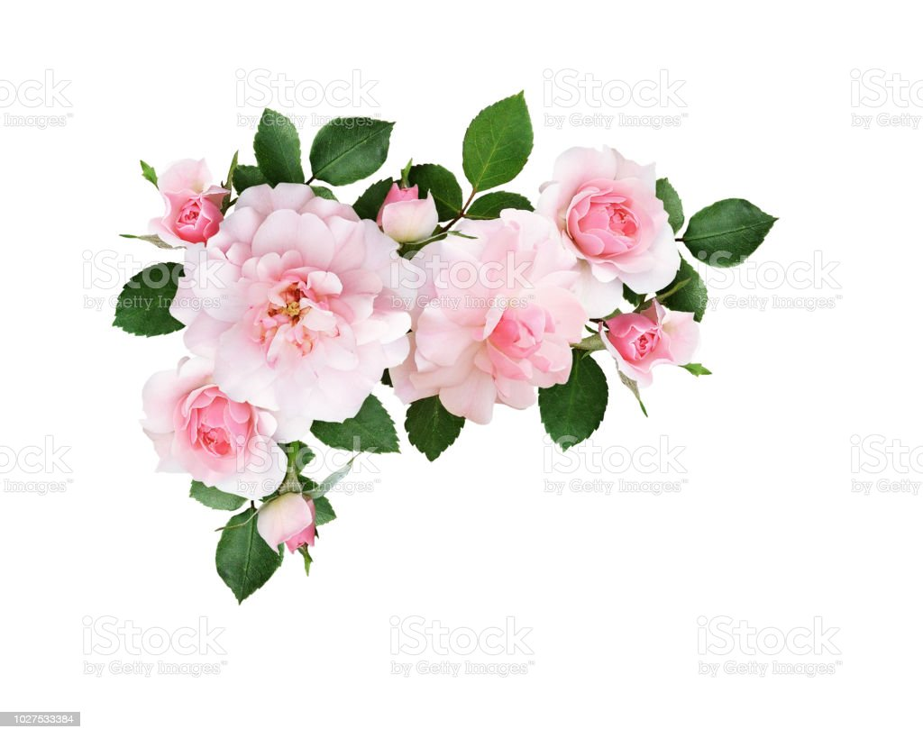 Pink Rose Flowers And Green Leaves In A Floral Corner Arrangement