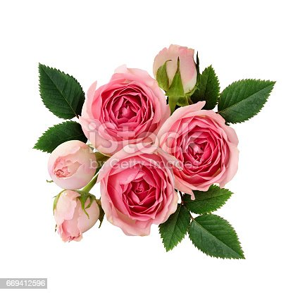 Pink rose flowers arrangement isolated on white. Flat lay.