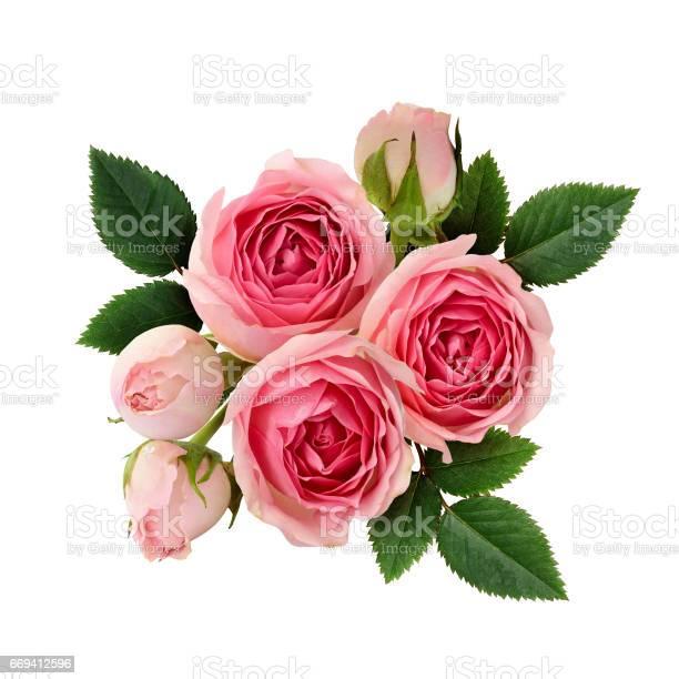 Pink rose flowers arrangement picture id669412596?b=1&k=6&m=669412596&s=612x612&h=liw0gubnceseo21mlx6 wte4jxfhmqhdrubnwvrdq64=