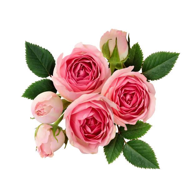 Pink rose flowers arrangement picture id669412596?b=1&k=6&m=669412596&s=612x612&w=0&h=i8epe7b6gnna1dyvq82vhq9lrtaqboxqee5zvp6ve6m=
