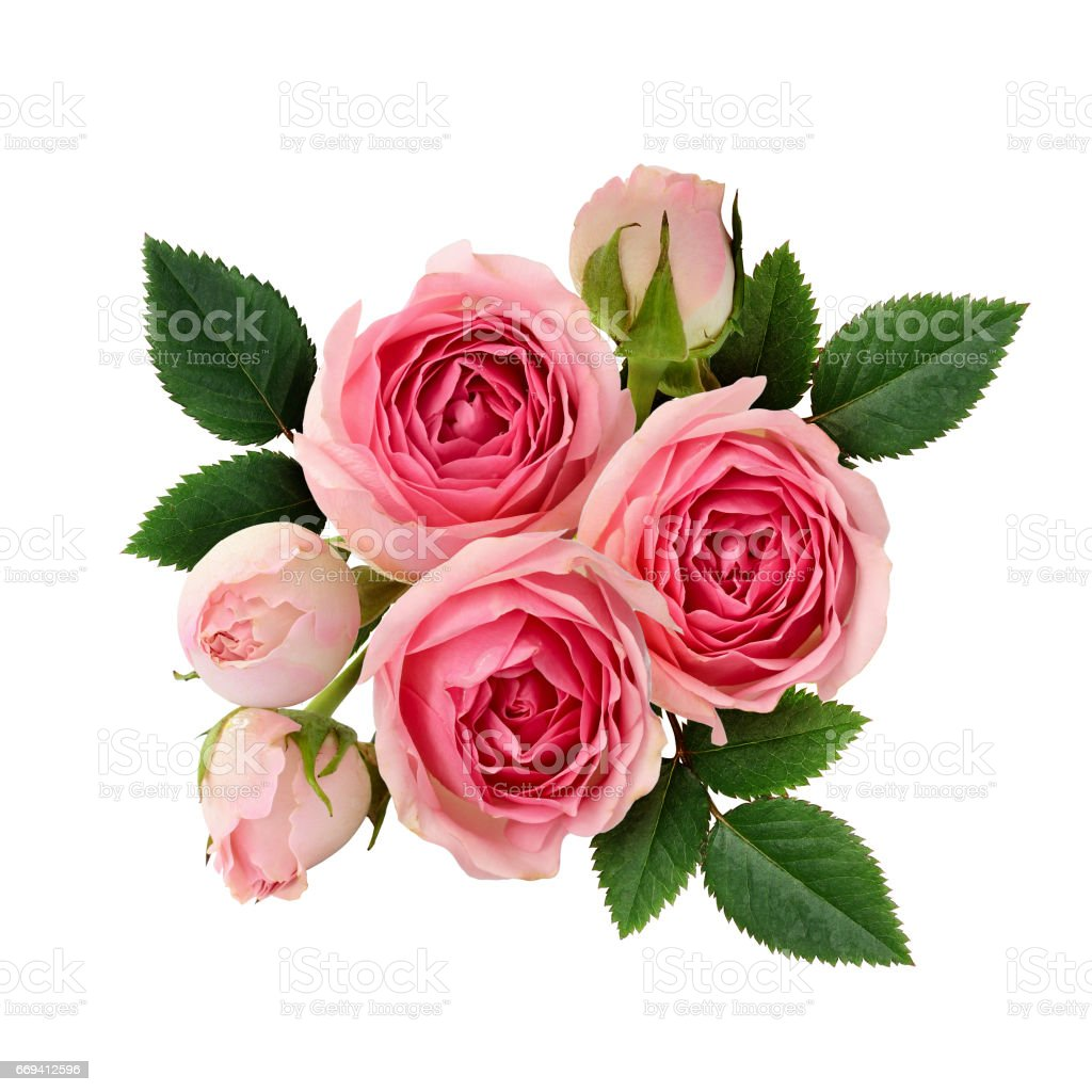 Pink rose flowers arrangement stock photo