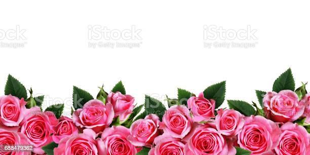 Pink rose flowers border isolated on white picture id688479362?b=1&k=6&m=688479362&s=612x612&h=nsr7u5fede5ujx15vk0 nylwmuv23n68dbpaxk2otki=