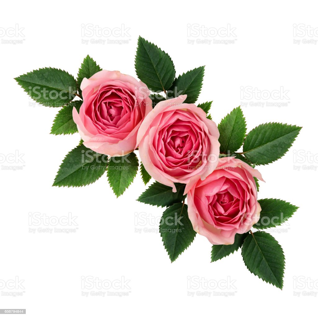Pink Rose Flowers Corner Arrangement Stock Photo More Pictures Of