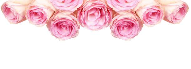 Pink rose flowers for top border picture id1255210660?b=1&k=6&m=1255210660&s=612x612&w=0&h=yysyt2hmmvvpergtr0g2tmyh4 2dsn4s4tiotavhqrm=