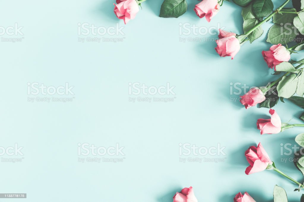 Flowers composition. Pink rose flowers on pastel mint background....
