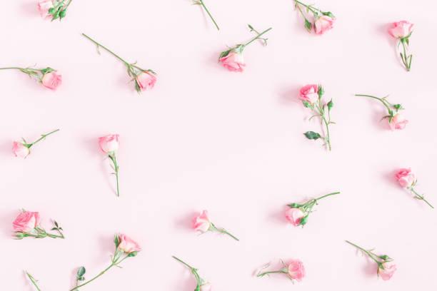 rosa flores rosas sobre fondo rosa. vista plana endecha, superior - women day fotografías e imágenes de stock