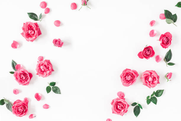 Pink rose flowers on white background flat lay top view picture id912277024?b=1&k=6&m=912277024&s=612x612&w=0&h=trdvvporpbutozf1xvrstb7x6e2d03stb emzi8pj1u=
