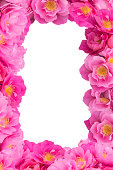 istock Pink Rose frame on white background isolated 470711831