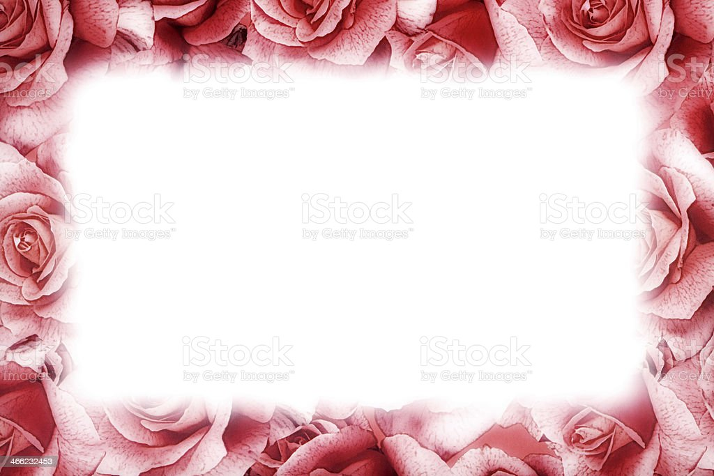 Pink rose frame royalty-free stock photo