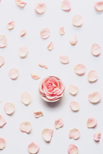 istock Pink rose head and petals scattered on white background 1089505328
