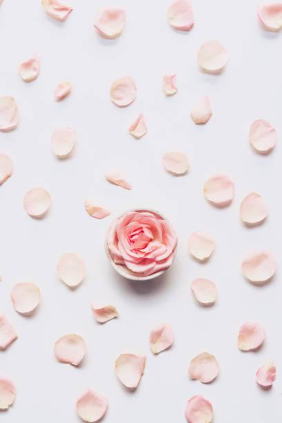 핑크 장미 머리와 흰색 바탕에 흩어져 꽃잎 - 꽃잎 뉴스 사진 이미지