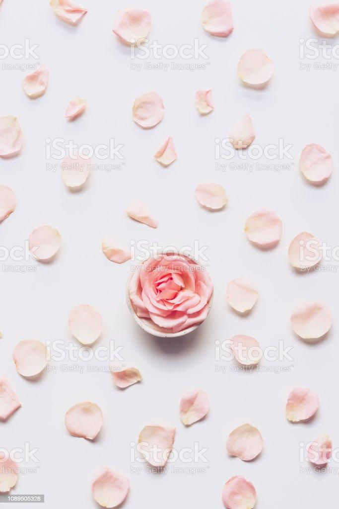 Rosa rose Kopf und Rosenblätter verstreut auf weißem Hintergrund – Foto
