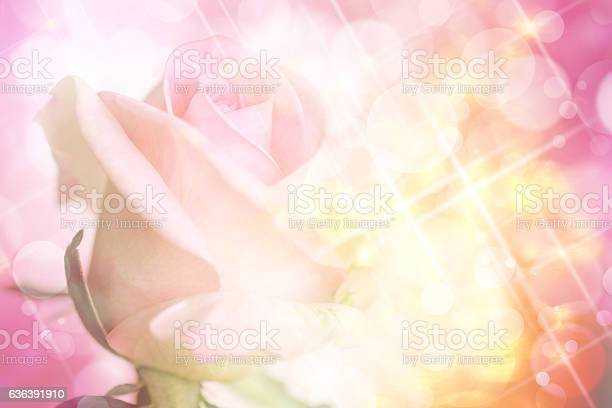 Pink rose on sweet bokeh and glitter background picture id636391910?b=1&k=6&m=636391910&s=612x612&h=cunzesmaefjwkkquppxh8vgvpw5dhyfmq5vgpcgzknq=