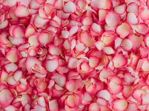 istock Pink rose petals background 913055630