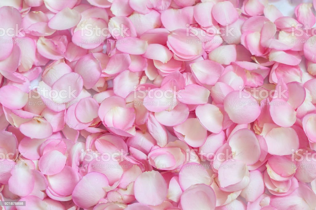 Pink rose petals background stock photo more pictures of pink rose petals background royalty free stock photo mightylinksfo