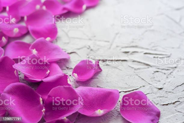 Pink rose petals on a plaster textured background with copy space picture id1256577791?b=1&k=6&m=1256577791&s=612x612&h=mroewr9bqfg5ybrvi4at31mk 6xptsmcfrbcg5hriou=