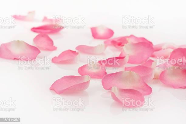 Pink rose petals on white picture id182414082?b=1&k=6&m=182414082&s=612x612&h=d5buwnilq0f9 7jimc4uzkrildn3b9tv1j hn8inzh8=