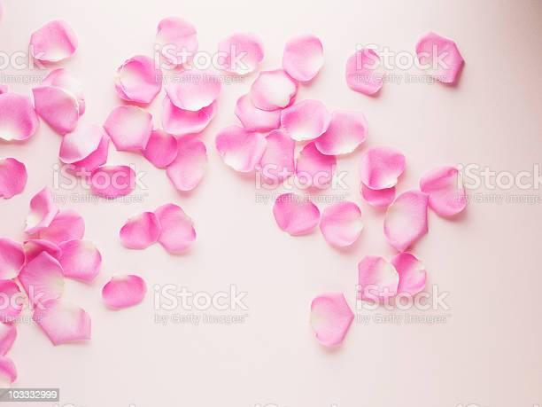 Pink rose petals picture id103332999?b=1&k=6&m=103332999&s=612x612&h=iuo7vl2a5ydovaqtxw7w fplummn49zrbo8lu4kmsdg=