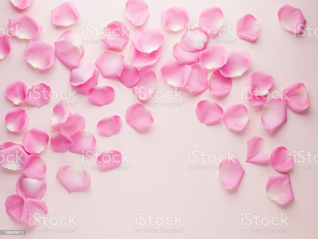 Pink rose petals stock photo