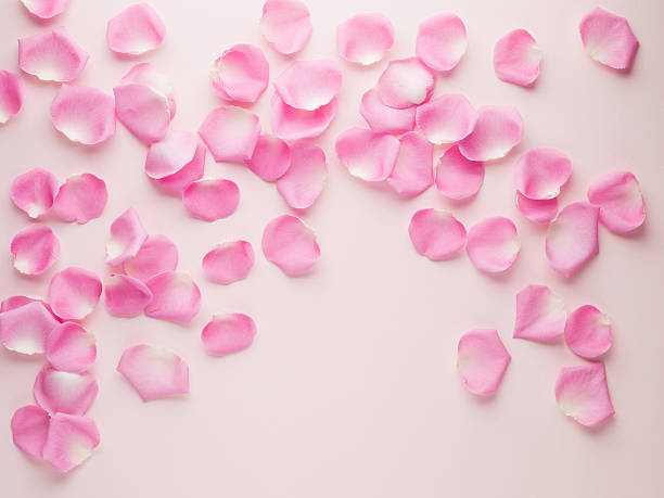 pink rose petals - rose petals stock pictures, royalty-free photos & images