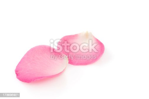 Two rose petals on white background. YOU MIGHT ALSO LIKE: