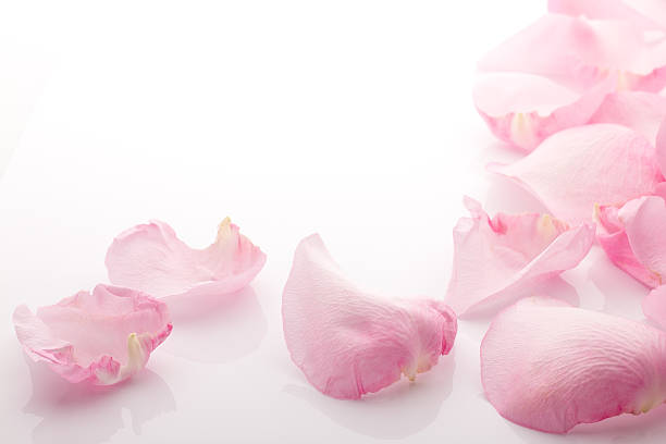Pink rose petals spilled onto white surface picture id176758129?b=1&k=6&m=176758129&s=612x612&w=0&h=bwu5cffvh2  dd9 nn5frm8ifkqvqdmnjfibotpzxnu=