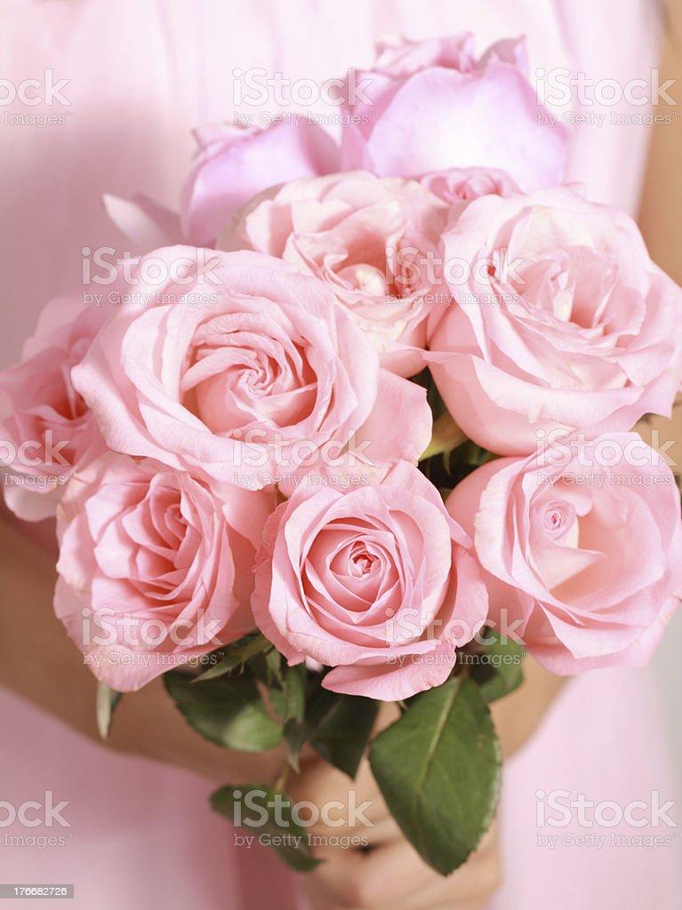 Pink rose foto de stock libre de derechos