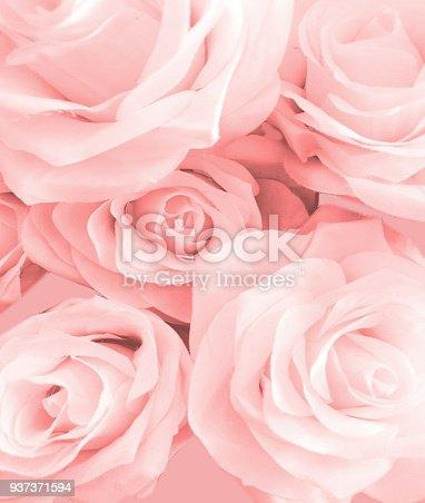 Pink rose flower on background