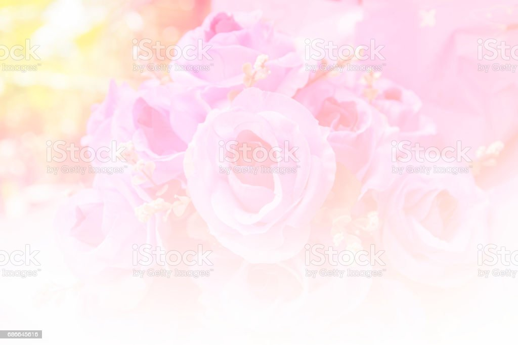 pink rose with colorful filter, flare Lizenzfreies stock-foto