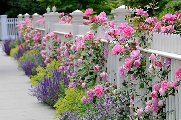 weißer zaun mit rosen - lattenzaun garten stock-fotos und bilder