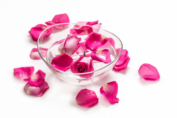 Pink roses and petals in bowl with pure water over white.. Spa and wellness concept stock photo