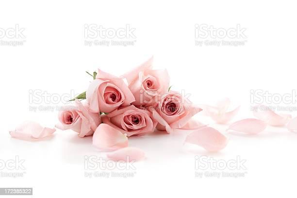 Pink roses and petals lying down picture id172385322?b=1&k=6&m=172385322&s=612x612&h=wluppca xabx55499zqvcnkk jgurqactoqugl45tyg=