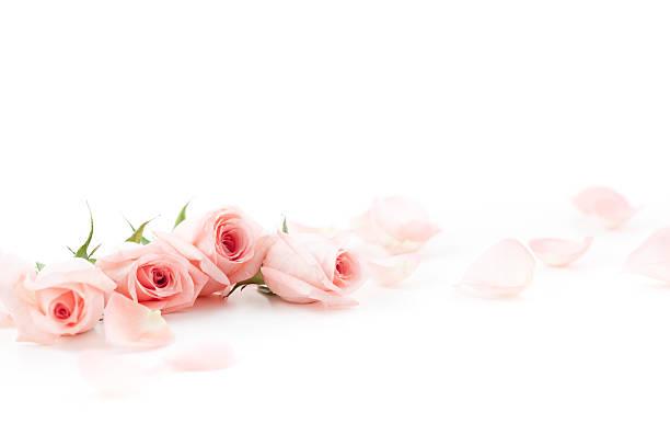 Pink roses and petals picture id174838980?b=1&k=6&m=174838980&s=612x612&w=0&h=6izfd8oqcavjhcyxfx3kdhacstb35bvbg3tctxc7clw=
