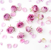 Pink roses and petals scattered on white background. Flat lay