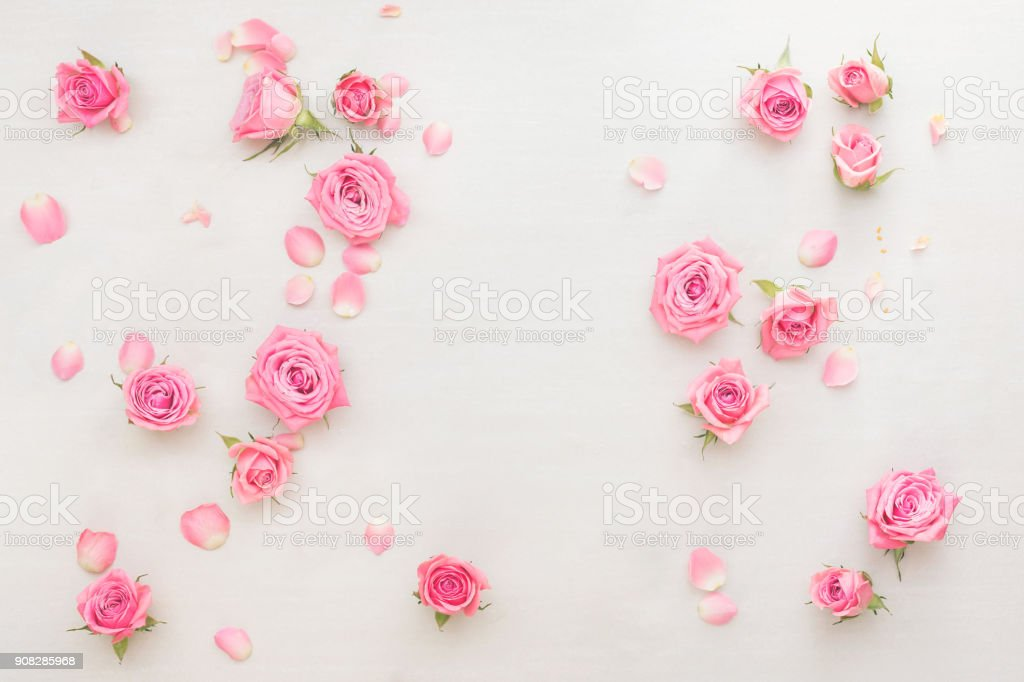 Pink roses buds and petals scattered on white background