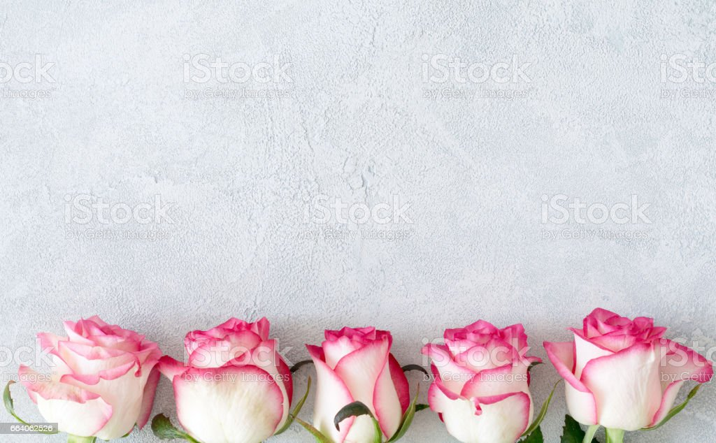 Pink roses floral card stock photo