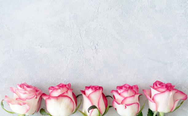 rosor rosa blommig kort - flower bouquet blue and white bildbanksfoton och bilder