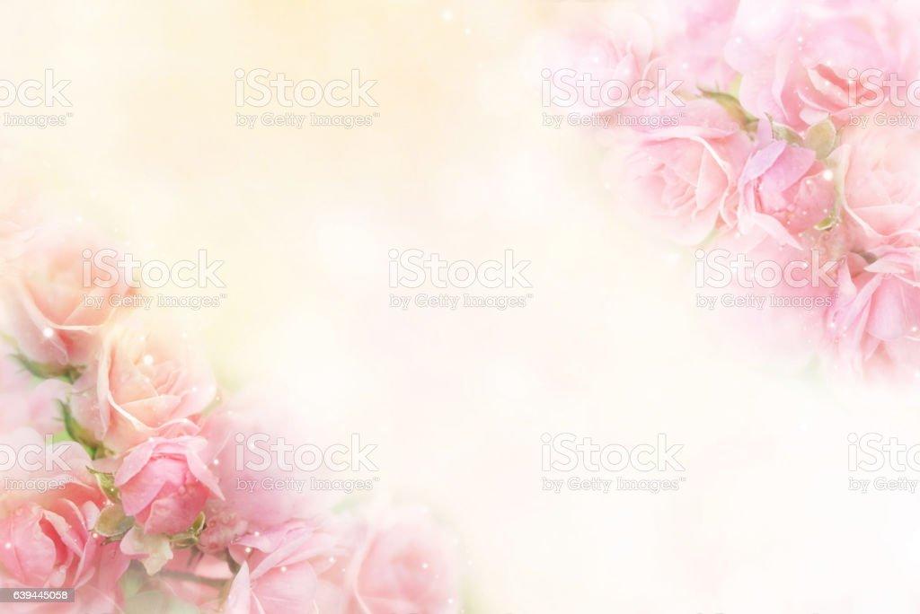 pink roses flower border soft background for valentine – Foto