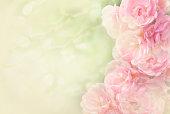 istock pink roses flower border soft background for valentine 864988114