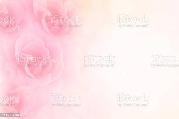 Pink roses flower vintage background for special events picture id826713398?b=1&k=6&m=826713398&s=612x612&h=jkpkgcmbzwgissru6tz5dbwwghkzlzp0xheff2tc6my=